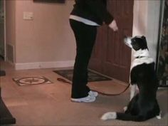 Teaching your dog to wait by default