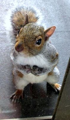 Squirrel!  Little dude awaiting supper.