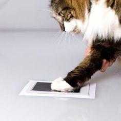 Zeiten Abdruck Little Darlings, Your Pet, Pet Supplies, Ink, Pets, Cards, Animals, Touch, Amazon