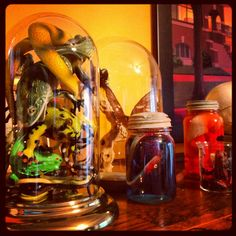 Insects, frogs, amphibians - creepy critters in jars