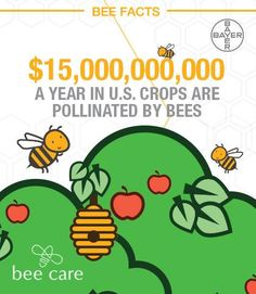 WOW! Man, I love ‪#‎BeeFacts‬! Via: World Beekeeping Awards ‪#‎Beekeeping‬ ‪#‎savethebees‬ ‪#‎honeycolony‬