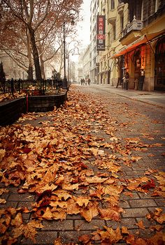SEASONAL – AUTUMN – a scenic pathway surrounded by the brilliant colors of fall in budapest, hungary, photo via pumpkins. Autumn Day, Autumn Leaves, Autumn Walks, Late Autumn, Autumn Aesthetic, Belle Villa, Seasons Of The Year, All Nature, Autumn Inspiration