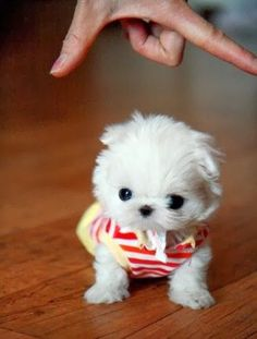 Cute puppies in cute dresses :) Just look at this little guy! When was it born? Cuz, its pretty small.