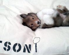 Pet Bedding – Etsy UK