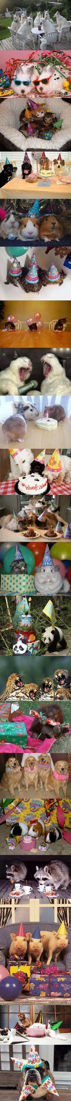 When animals party. this should not be as funny as it seems but I just can't stop giggling. Also, I'm putting party hats on the tortoises this summer. For sure.