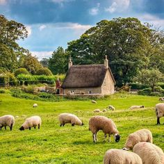 Whether in the Cotswolds in England, the Loire Valley in France, or the Hudson Valley here in New York, nothing compares to a weekend in… Country Life, Country Living, Castle Combe, Sheep And Lamb, Country Scenes, Down On The Farm, Rural Area, English Countryside, Hudson Valley