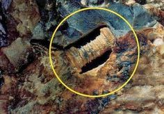 The 300 million year old screw that has researchers scratching their heads | Earth. We are one