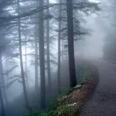 Foggy Morning (@_FoggyMorning_) | Twitter