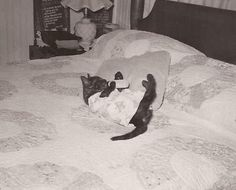 Baby Kitty, Vintage Photograph, Black and White Snapshot, Cat Dressed in Baby…