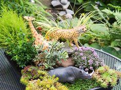 More Fun Fairy Garden Ideas --> http://www.hgtvgardens.com/family-gardening/family-gardening-create-a-miniature-garden?soc=pinterest