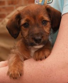Find out what to expect the first nights with your new puppy at The Dog Word, your one stop dog shop.