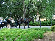 Enjoying a carriage tour through the picturesque Historic District of Savannah…