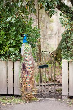 Martha Stewart Weddings – Like the dazzling blue-green-gold feathers of a peacoc… – Modalbox Charleston South Carolina, Charleston Sc, Green And Gold, Blue Green, Romantic Honeymoon Destinations, Middleton Place, Gold Feathers, Martha Stewart Weddings, Most Romantic