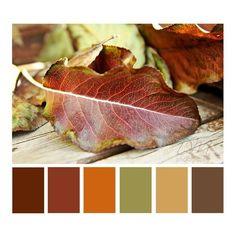Autumn Leaves {brown orange color palette} found on Polyvore