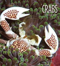 Crabs, Melissa Gish, 9781608185658