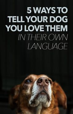 5 WAYS TO TELL LYOUR DOG YOU LOVE THEM IN THEIR OWN LANGUAGE - great read!!! http://iheartdogs.com/5-ways-to-tell-your-dogs-you-love-them-in-their-own-language/