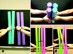 Teaching mitosis and meiosis using pool noodles