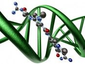BRAF: From Gene to Cancer Therapy. A science, biology video resource