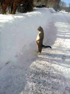 rofl cat, marking your territory, like a boss