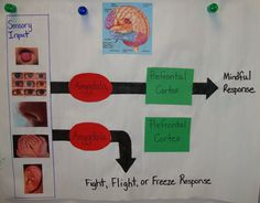 Mindful Response or Fight, Flight, or Freeze Response