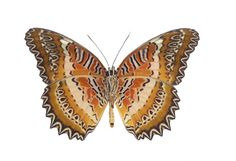natural beauty: butterfly patterns...nature is the best designer