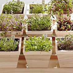 Micro greens indoors