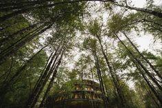 Reino Fungi Lodge Quarto Superior – Huilo Huilo Reserva Biológica – Patagonia Codillera de los Andes Chile