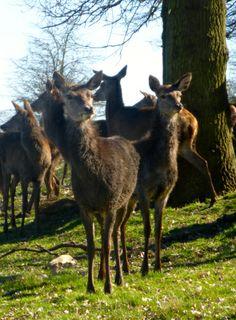 March deer