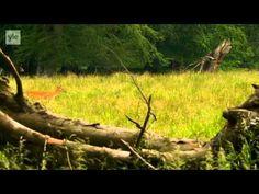 Avara luonto - Villi Pohjola (4/6) Tanska