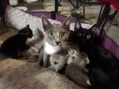 A kind woman had been feeding two stray sisters until one day they surprised her with their eight tiny fur babies on her patio.  Meet mama Artemis (left) and mama Apollo (right).  Courtesy: Finny's Finds  Thoa, Thi and Tram Bui of  Lilo the Husky took in a furry family of 10 - two mama cats an...