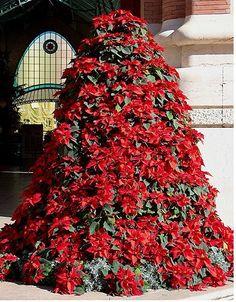 FlorVisión: El árbol de navidad más bonito no es un abeto.