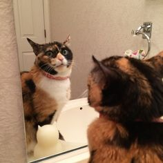 Our cat finally sees her real self - Imgur