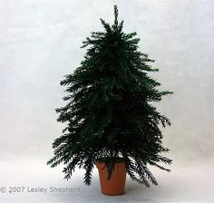 Make a realistic scale miniature Christmas tree for a dolls house, railroad scene, or Christmas village using a basic bottle brush or bottle brush craft tree and preserved lycopodium (prince's/princess pine) greenery.
