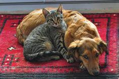 https://flic.kr/p/gcacr9 | Friendship of Cat and Dog