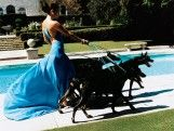 JLo, just walking the dogs...  Jennifer Lopez, Los Angeles  Mario Testino: In Your Face at the Museum of Fine Arts, Boston