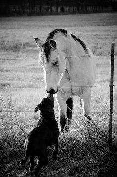 so good to see you. Looks like Enza's daily greetings to the horses next door -- she adores them, and they adore her back..I need to get some pics.