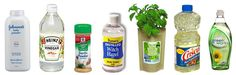 Pest Patrol: Use Natural Products to Rid Your Home of Bugs