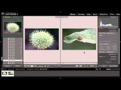 Lightroom 4 | Library Module: Flag & Keyword