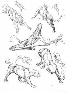 Références lionnes ☺