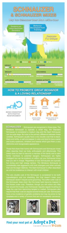 Everything you ever wanted to know about #Schnauzer and Schnauzer mixes. www.adoptapet.com