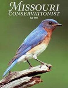 Raising Tadpoles   Missouri Department of Conservation
