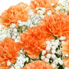 orange carnation | Home / Flowers by Post / Carnations by Post / Orange Carnations ...