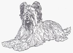 """Dog Rubber Stamp - Briard-1E (Size: 2-3/4"""" Wide X 2"""" Tall) *** Click image for more details."""