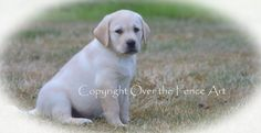 Dog Card Yellow Labrador Portrait by overthefenceart on Etsy