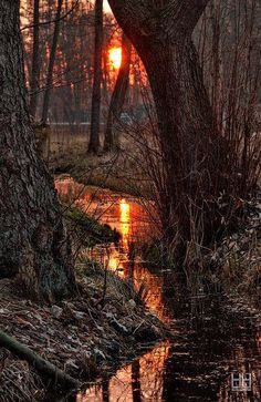 Sunset, northern woods