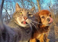 """いいね!46.3千件、コメント531件 ― Manny The Selfie Catさん(@yoremahm)のInstagramアカウント: 「 """"On a Tuesdayyyy""""」"""
