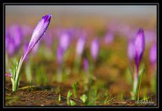 Vougelisha : fiolet czy niebieski kolorem wiosny?