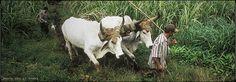 Bridgehead Fair Trade, Goats, The Neighbourhood, Coffee, Animals, Kaffee, Animais, Animales, Fair Trade Fashion
