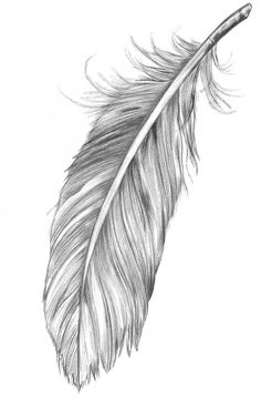 Feather drawn