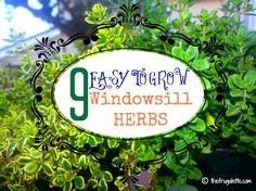 9 easy to grow windowsill herbs